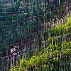 Farmer tends yucca plantation in Colombia by robinmoore