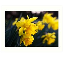 Daffodil Day Art Print