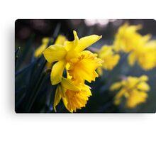 Daffodil Day Metal Print