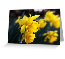 Daffodil Day Greeting Card