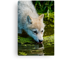 Mighty Big Thirst For A Little Fella Canvas Print