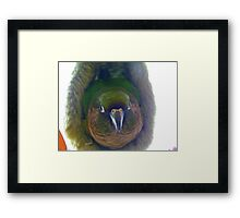 Can Somebody Please Turn The Light Off!!... Maroon-Bellied Conure - NZ Framed Print