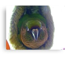 Can Somebody Please Turn The Light Off!!... Maroon-Bellied Conure - NZ Canvas Print