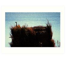 Smart Goose(Sitting on the Hunters Blind) Art Print