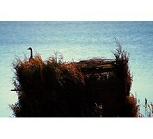 Smart Goose(Sitting on the Hunters Blind) Photographic Print