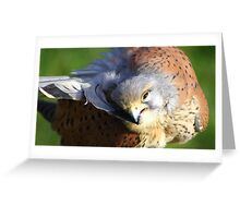 Feather Preening  Greeting Card