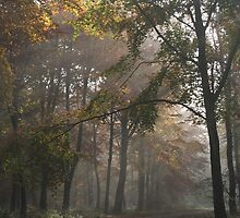 Early Morning In The Forest by Graham Ettridge
