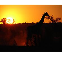 Giraffe at Sunset Photographic Print