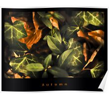 Autumn leafs Poster