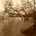 Ducks on Derwent Water by Blondilox