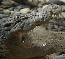 Crocodile by Ande Reid