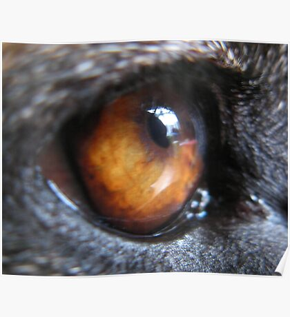 GERMAN SHEPERD DOG EYE Poster