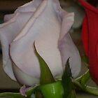 A Rose by Elizabeth  Cortez