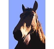 HORSE HEAD  Photographic Print