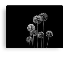 Allium Array Canvas Print