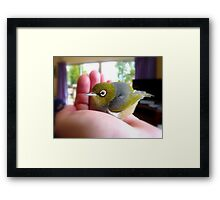 Humpty Dumpty Had A Big Fall...Silver-Eye NZ Framed Print