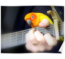 Music Is My Life! - Sun Conure - NZ Poster