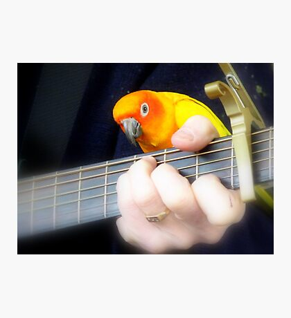 Music Is My Life! - Sun Conure - NZ Photographic Print