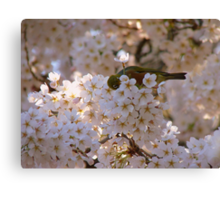 AhahahCHOO!! Blimey I'm Lucky I Don't Have Hay-Fever!! - Silvereye - NZ Canvas Print