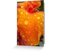 Rain Droplets on Orange Beauty Greeting Card