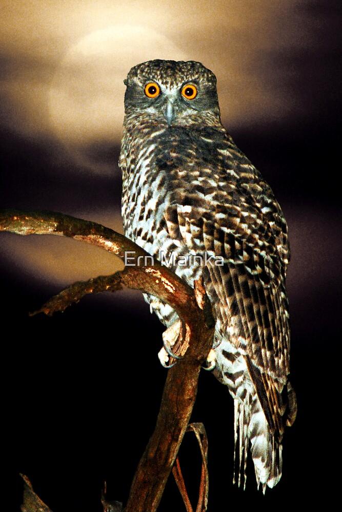 Powerful Owl by Ern Mainka
