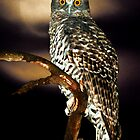 Powerful Owl by Ern Mainka