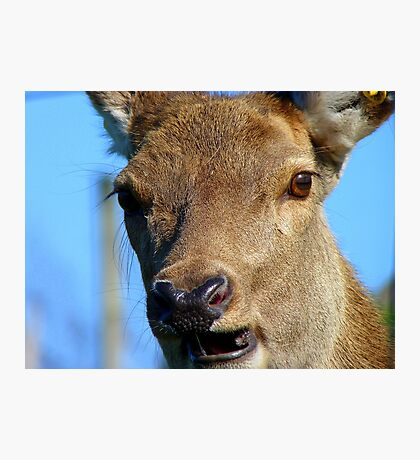 Oh Deer...I Think I May Have Broken A Tooth! - Deer - NZ Photographic Print