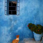 Kasbah Cat Rabat by Scott Harding