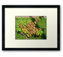 Autumn Leaves of Russet and Green Framed Print