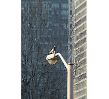 Urban Nature Photographic Print