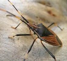 photoj macro bug-Insect by photoj