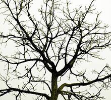 Winter Tree by JonHanson