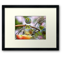 AND SO!!.. Where Is The Better Half?  - Silver-Eye - NZ Framed Print