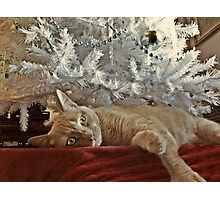 Tired of Waiting For Santa Photographic Print