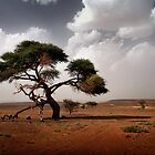 Saharan Acacia by Scott Harding