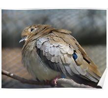 Oh Yea!! Bring It ON.. Sunshine And A Little ZZzzzzz!! - Masked Dove Female - NZ Poster