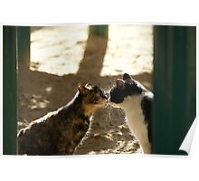 2 Cats Kissing Poster
