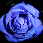 Blue Flower 1 by Yvonne Carsley