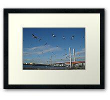 Gull-Posts Framed Print