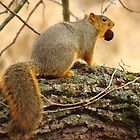 Squirrel With Nut by lorilee
