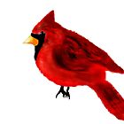 Cardinal by Penny Marcus