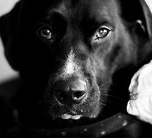 Bailey Dogg by rudavis