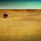 One Tree Hill by Tony Lomas