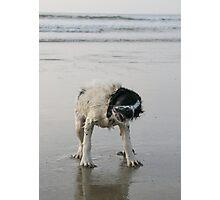 Shakin' Dog Photographic Print