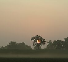 Foggy Surise 2 by William Reed