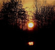 Woodland Sunset by jdmphotography