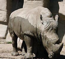 Rhino at the Detroit Zoo by Paladin27