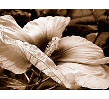 Peaceful Unfolding Photographic Print
