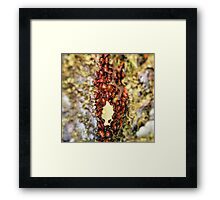 tunnel in a tree 1 Framed Print