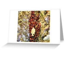 tunnel in a tree 1 Greeting Card